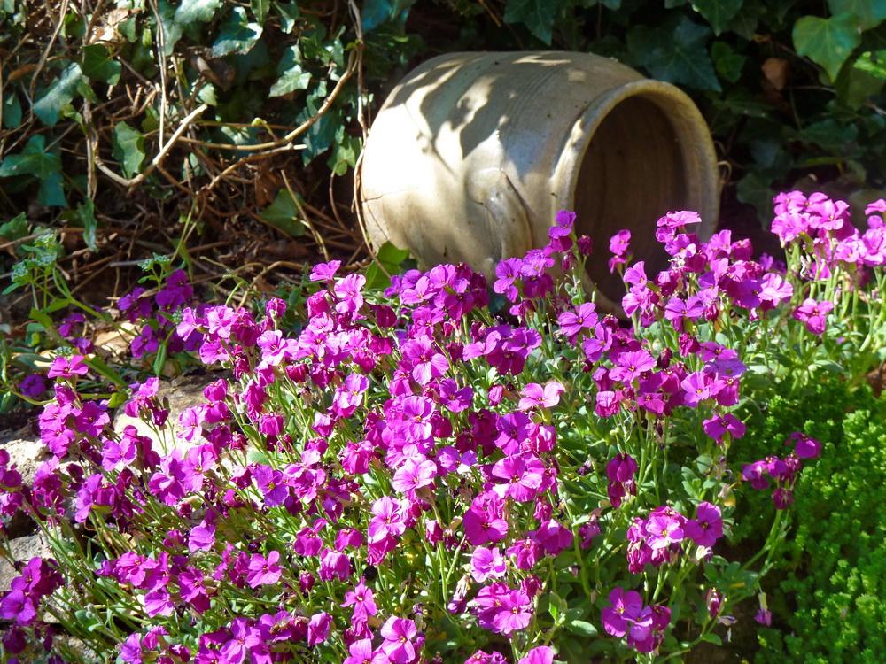 Flowers & pot