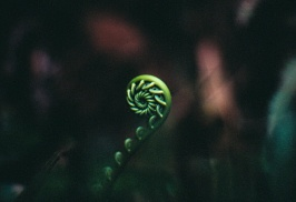Fibonacci emerges