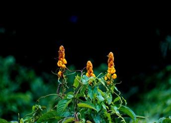 Floral stalagmites
