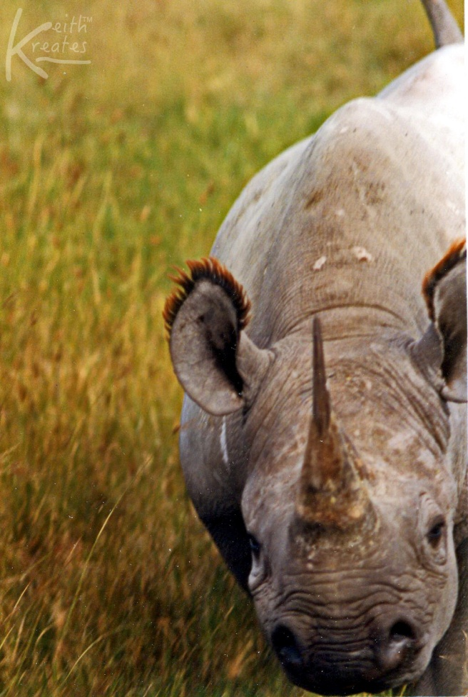 Rhino saw us!
